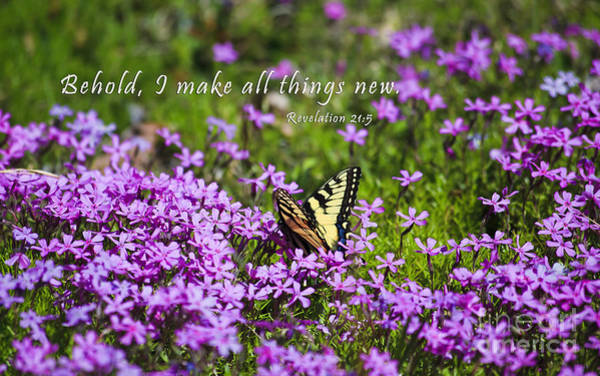 Photograph - I Make All Things New by Jill Lang