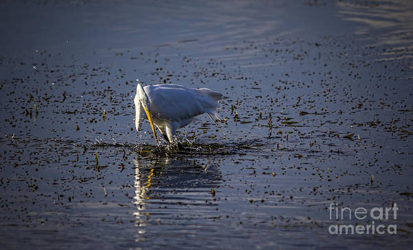 Egret Photograph - I Missed by Marvin Spates