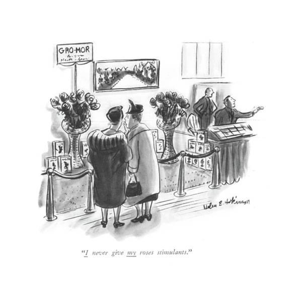 Gardener Drawing - I Never Give My Roses Stimulants by Helen E. Hokinson