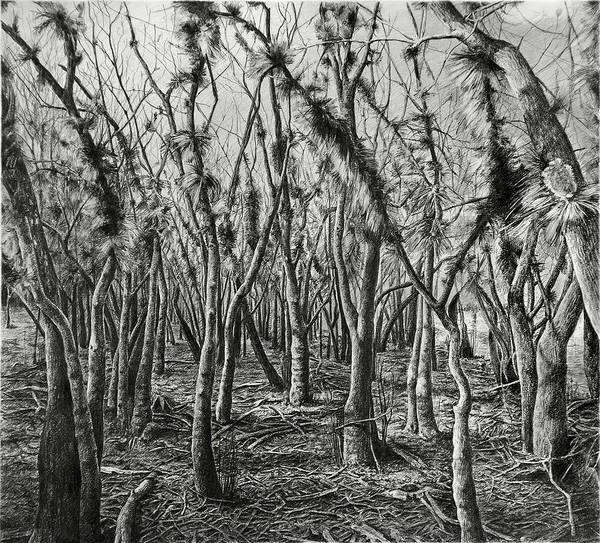 Drawing - If Not For These Trees I Could See The Forest by William Underwood