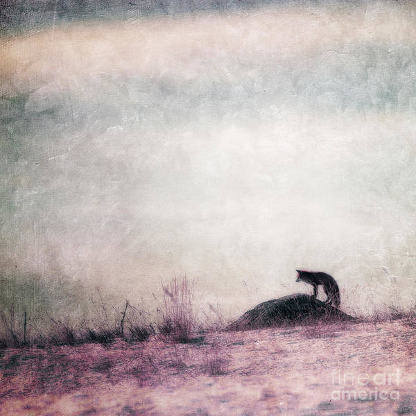 Wintry Photograph - I Only Hear Silence by Priska Wettstein
