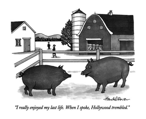 Pig Drawing - I Really Enjoyed My Last Life.  When I Spoke by J.B. Handelsman