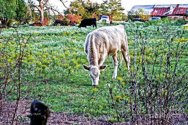 Photograph - I See Cows by Ms Judi
