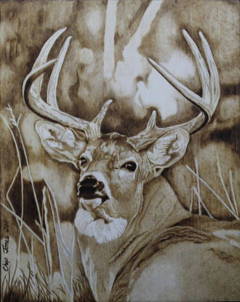 Whitetail Drawing - I See You... by Chip Jones