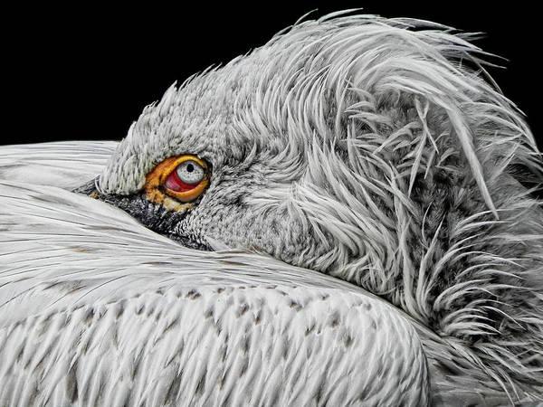 Bird Watching Photograph - I See You by Joachim G Pinkawa