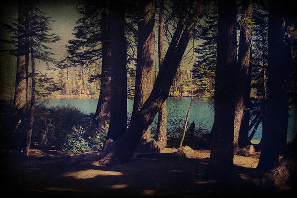 South Lake Tahoe Photograph - I Sit In The Shadows by Laurie Search