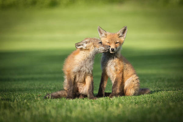 Kit Fox Photograph - I Still Love You by Everet Regal
