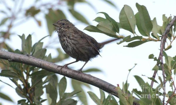 Photograph - I Tawt I Saw A Birdie by Vivian Martin