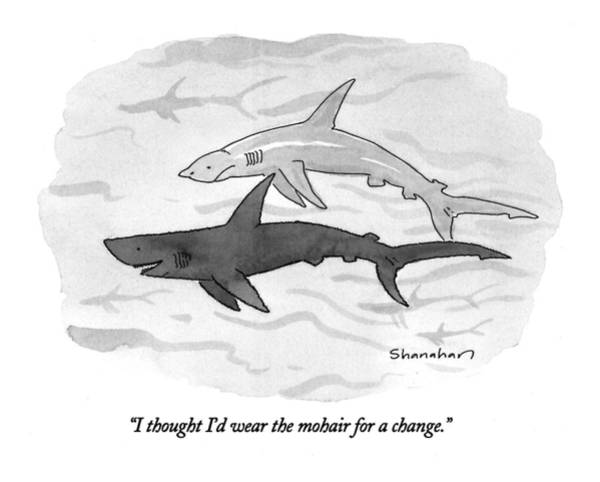 Sharks Drawing - I Thought I'd Wear The Mohair For A Change by Danny Shanahan