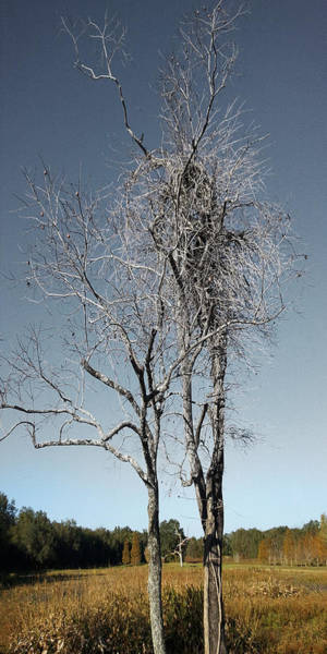 Photograph - I Want To Be A Tree by Steve Sperry