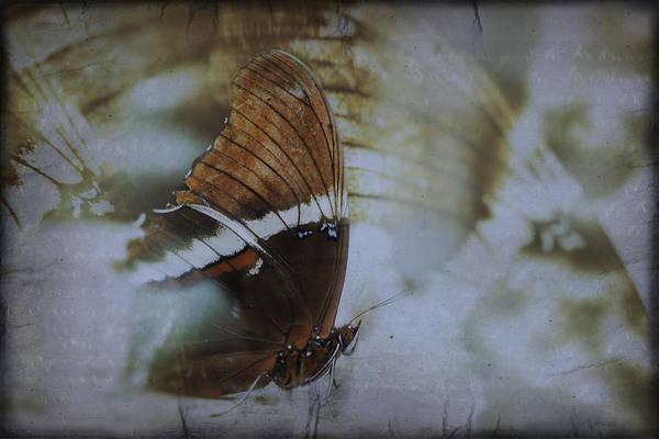 Photograph - I Wish I Had Wings by Eduardo Tavares