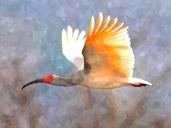 Ibis Wall Art - Painting - Ibis In Flight by John Samsen