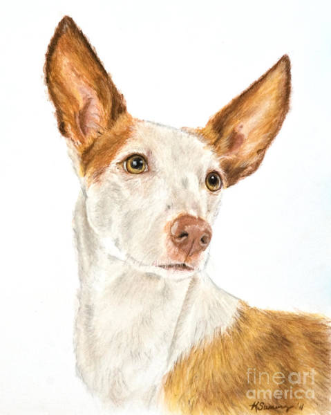Art Print featuring the drawing Ibizan Hound In Pastel by Kate Sumners