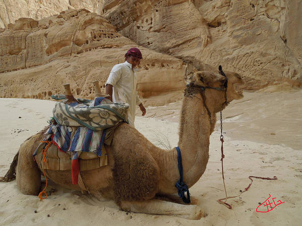 Photograph - Ibrahim Beduin  Owner With Friend Camel Bou Bou Desert Sinai Egypt by Colette V Hera  Guggenheim