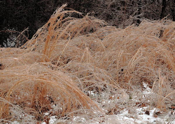 Photograph - Ice And Dry Grass by Daniel Reed