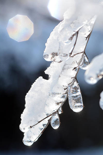 Photograph - Ice And Snow-5601 by Steve Somerville