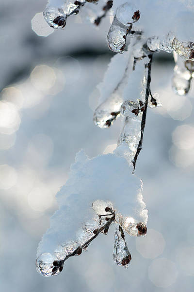 Photograph - Ice And Snow-5700 by Steve Somerville