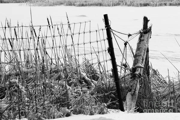 Southern Ontario Photograph - Ice Coated Wire Fence And Rushes After A Winter Storm by Louise Heusinkveld