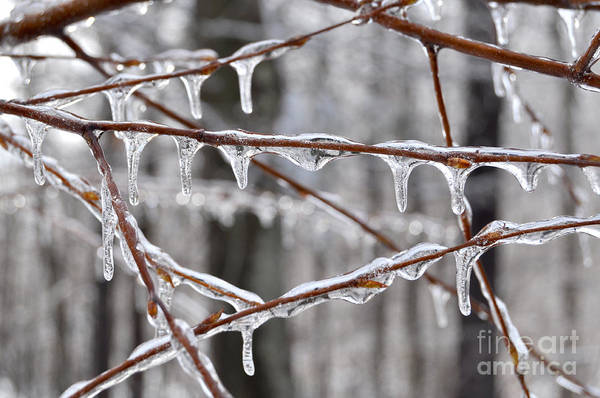 Photograph - Ice Covered Branches by Staci Bigelow