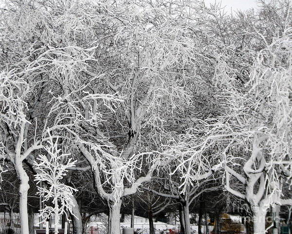 Photograph - Ice Covered Trees At Niagara Falls State Park by Rose Santuci-Sofranko