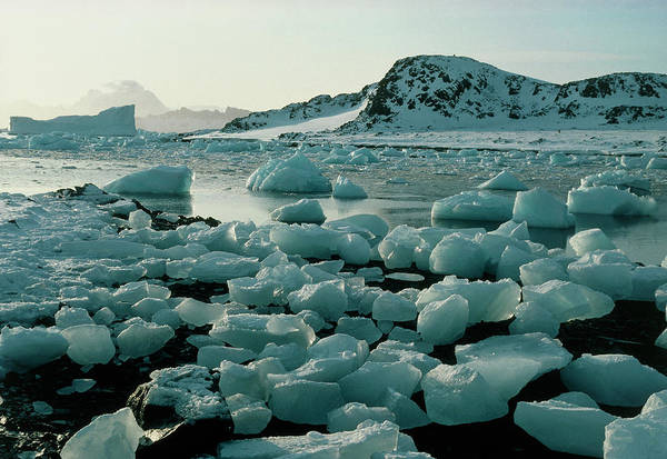 Ice Floe Photograph - Ice Floes Around Antarctic Coast by Simon Fraser/science Photo Library