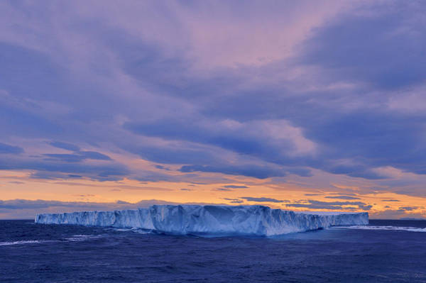 Photograph - Ice Island by Tony Beck