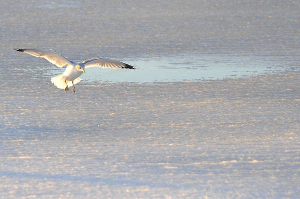 Photograph - Ice Landing by Terry DeLuco