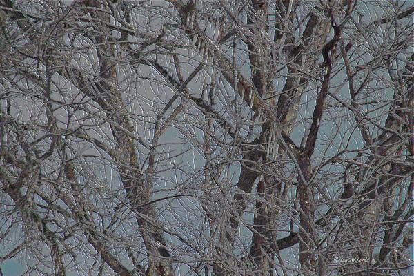 Photograph - Ice Storm 42 by Ericamaxine Price
