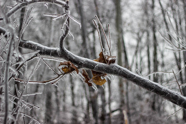Capable Photograph - Ice Storm by Grant Little
