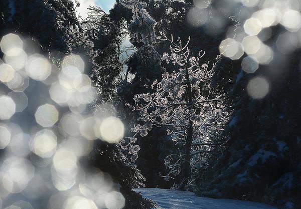 Ice Tree-5074 Art Print