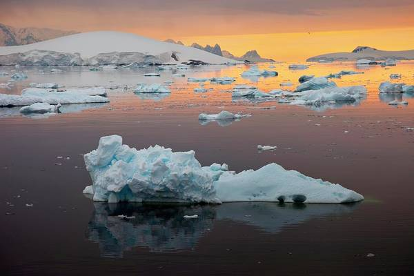 Ice Floe Photograph - Icebergs In Antarctica by Peter Menzel/science Photo Library