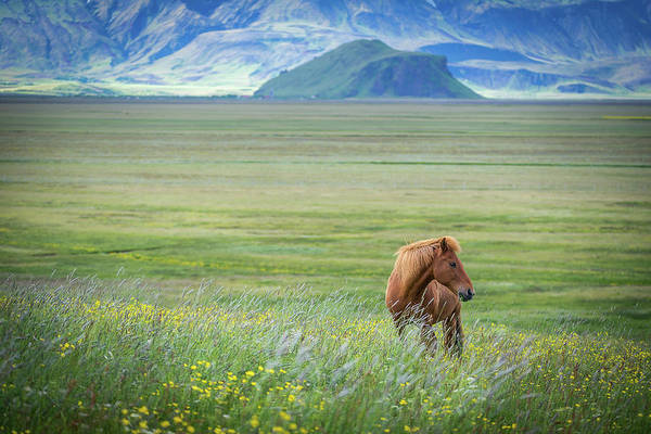 Green Grass Photograph - Iceland In A Nutshell by Petra M. Schmitz