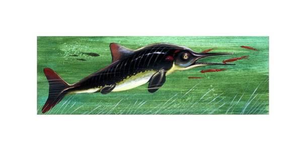 Paleozoology Wall Art - Photograph - Ichthyosaurus Marine Dinosaur by Deagostini/uig