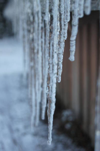 Wall Art - Photograph - Icicles by Angi Parks