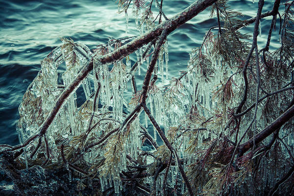 Photograph - Icy Branch by Ari Salmela