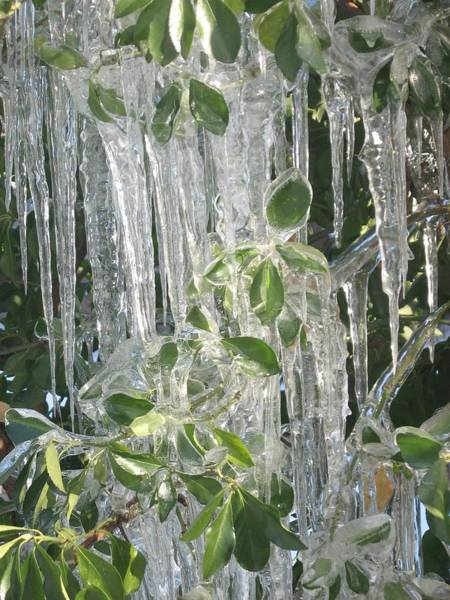 Photograph - Icy Green by Deb Martin-Webster
