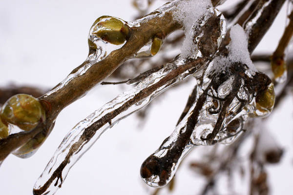 Photograph - Icy by Mike Murdock