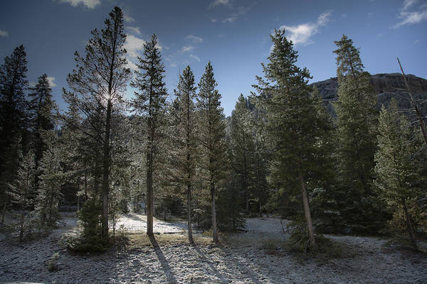 Photograph - Icy Morning by Jack R Perry