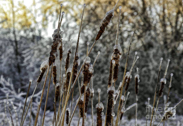 Photograph - Icy Reeds by Les Palenik