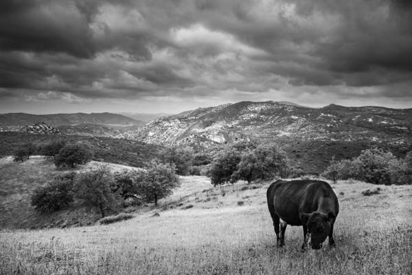 Photograph - Idyll With Cow by Alexander Kunz