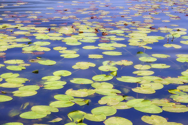Water Lillies Photograph - Idyllic Pond by Joana Kruse