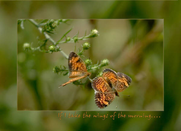 Photograph - If I Take The Wings Of The Morning by Denise Beverly