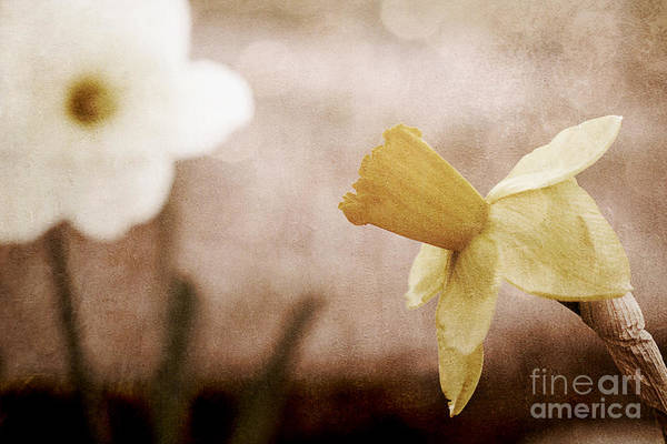 Wall Art - Photograph - If These Flowers Could Speak  by Trish Mistric