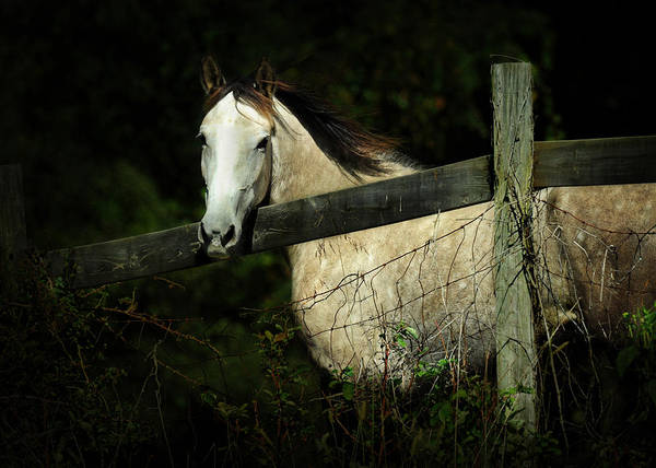 Photograph - If Wishes Were Horses by Rebecca Sherman