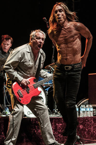 Photograph - Iggy Pop Live by Larry Hulst