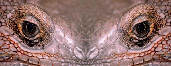 Don Johnson Photograph - Iguana Eyes by Don Johnson