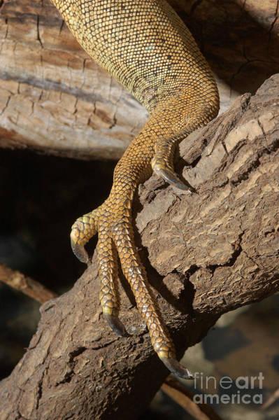 Photograph - Iguana Foot by John Mitchell