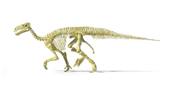 Wall Art - Photograph - Iguanodon Dinosaur Skeleton by Leonello Calvetti/science Photo Library