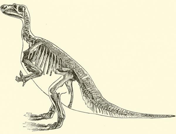 Birthday Drawing - Iguanodon by English School