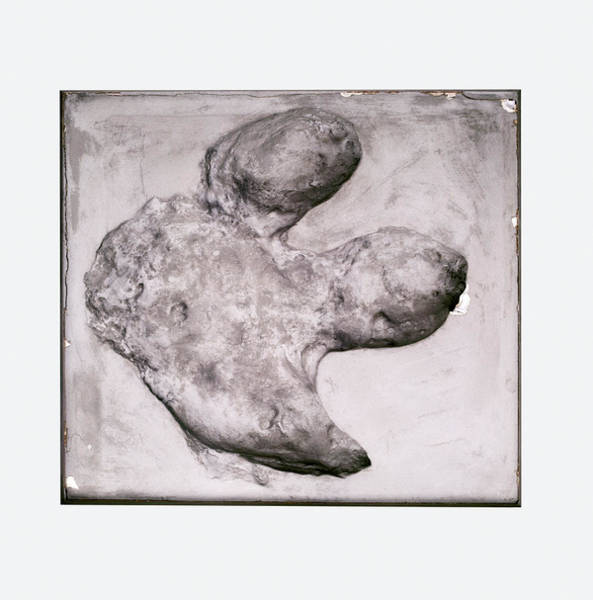 Wall Art - Photograph - Iguanodon Footprint by Dorling Kindersley/uig